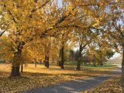 秋の参歩道